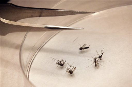 Health Department: Oakland County Man Dies From West Nile Virus