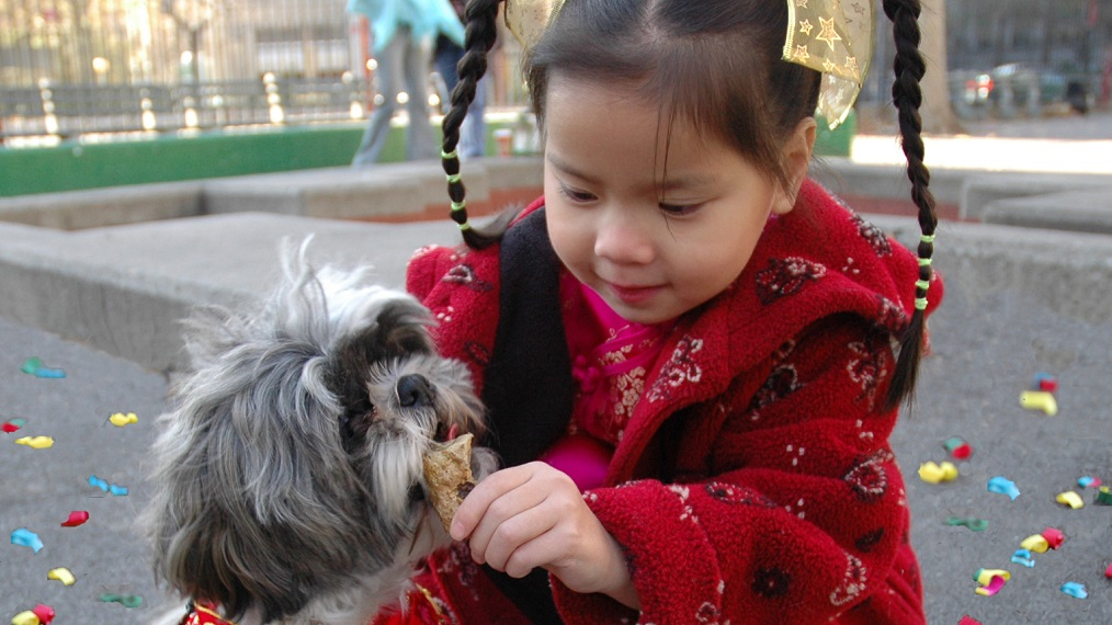 chinatown-dog-girl-lunar-new-year