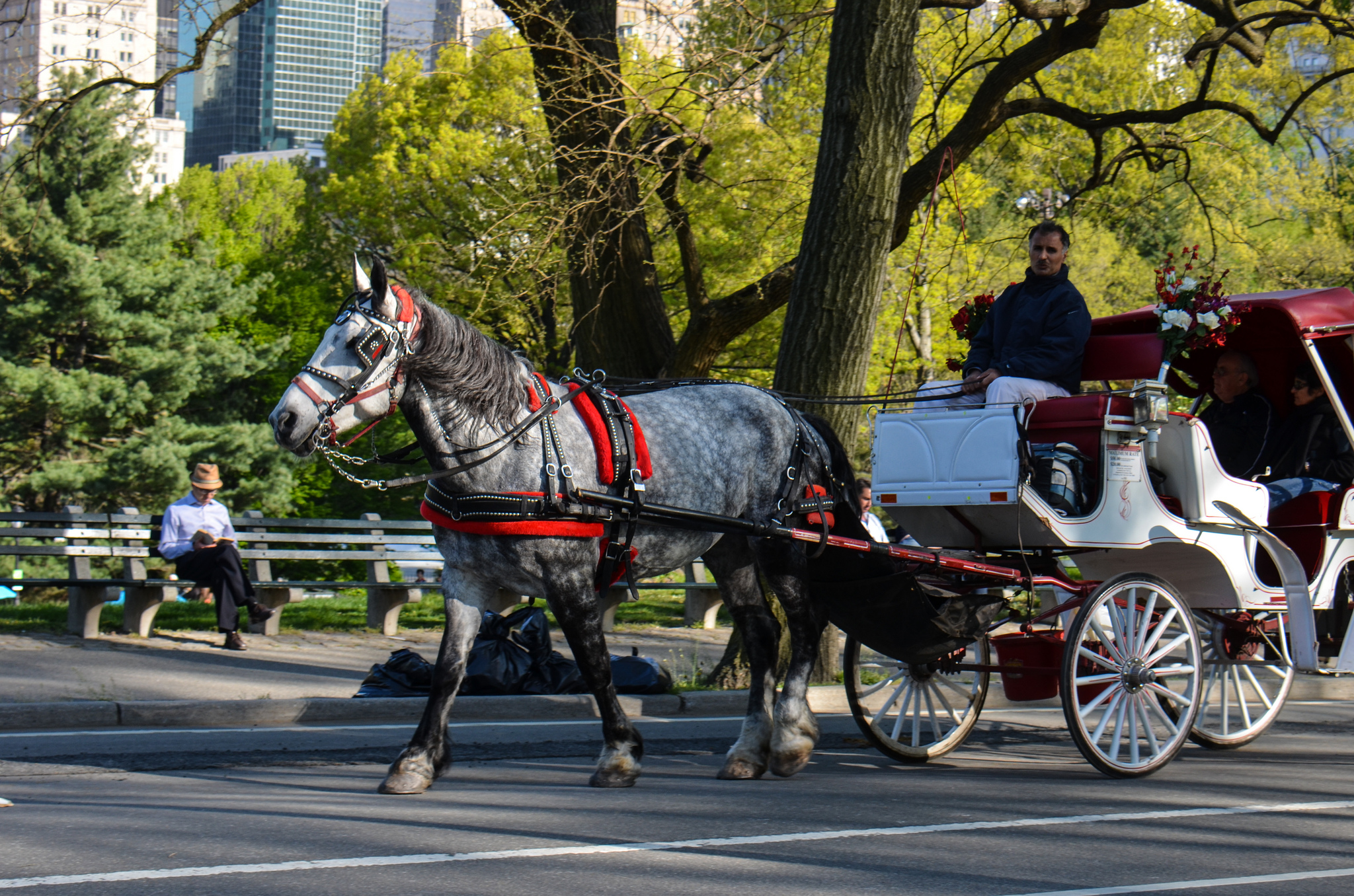 nyc pulls reins on plan for central park horse carriages wfuv. Black Bedroom Furniture Sets. Home Design Ideas