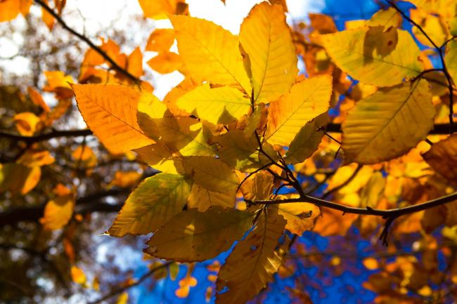 Autumn leaves (photo by Gala Napakh)