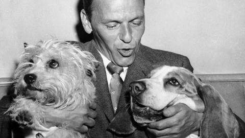 Frank Sinatra and dogs