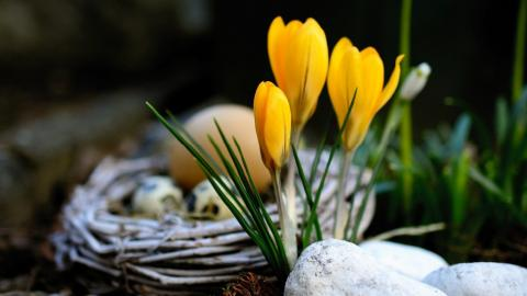 Spring crocuses (photo by Conger Design for Pixabay)