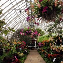 Spring Break in NYC: A Tropical Oasis in the BX