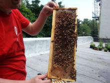 Cityscape: The World of Beekeeping in NYC