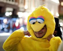 Big Bird costumes Flying Out of Halloween Stores