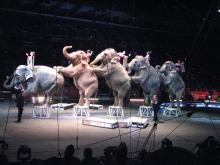 NY Lawmaker Hails Circus Elephant Decision
