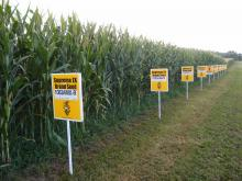 Supporters Rally For Labels on GMO Foods in NY