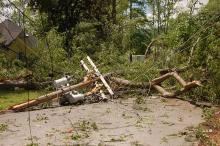 NYC Lawmakers Want to Remove Trees Damaged by Severe Weather