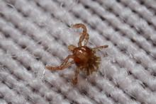 Summer Could Bring Higher Risk of Lyme Disease