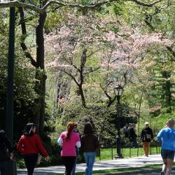 NYC Getting New Parks Commissioner