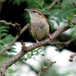 Environmental Advocates Call on Connecticut to Protect Bird Populations in the State