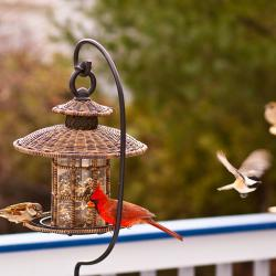 New Yorkers Urged to Clean Dirty Bird Feeders