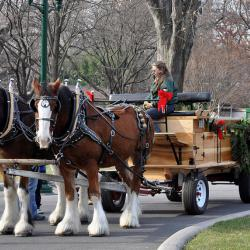 Bill to Ban NYC Horse Carriages Approaches