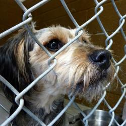 NYC Animal Shelters are Getting an Upgrade