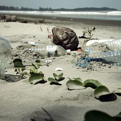 Beach Sweep Report Out Today