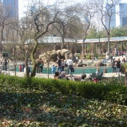 Central Park Grizzly Bears Debut