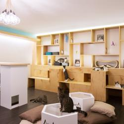 Cool Cats: NYC Gets First 'Cat Cafe'