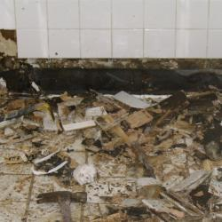 Professor Warns Flooded Residents about Dangers of Mold