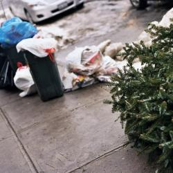 NYC Considers Christmas Tree Disposal Fine