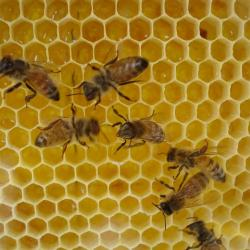 Posh Hotels Are Buzzing With Tiny New Guests: Bees