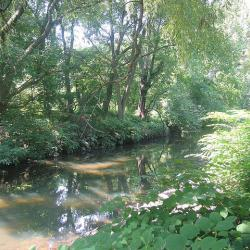 Bronx River Gets Special Recognition