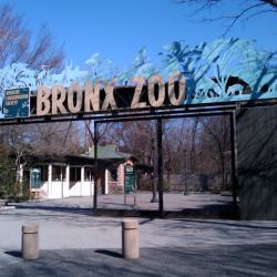Toy Donors To Receive Free Ticket To The Bronx Zoo