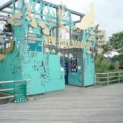 New York Aquarium will Partly Reopen on May 25th