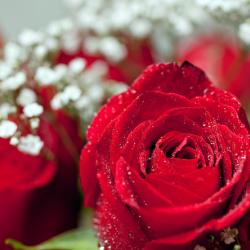 Florists Stay Busy For Valentine's Day