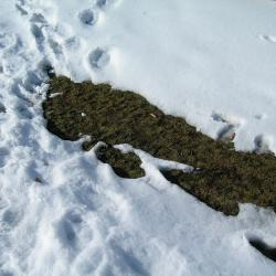 Less Snow Could Mean Fewer Floods, Tame Rapids