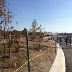 New Park Takes Shape on Governor's Island